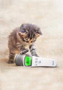 QuallThermo ile oynayan yavru kedi